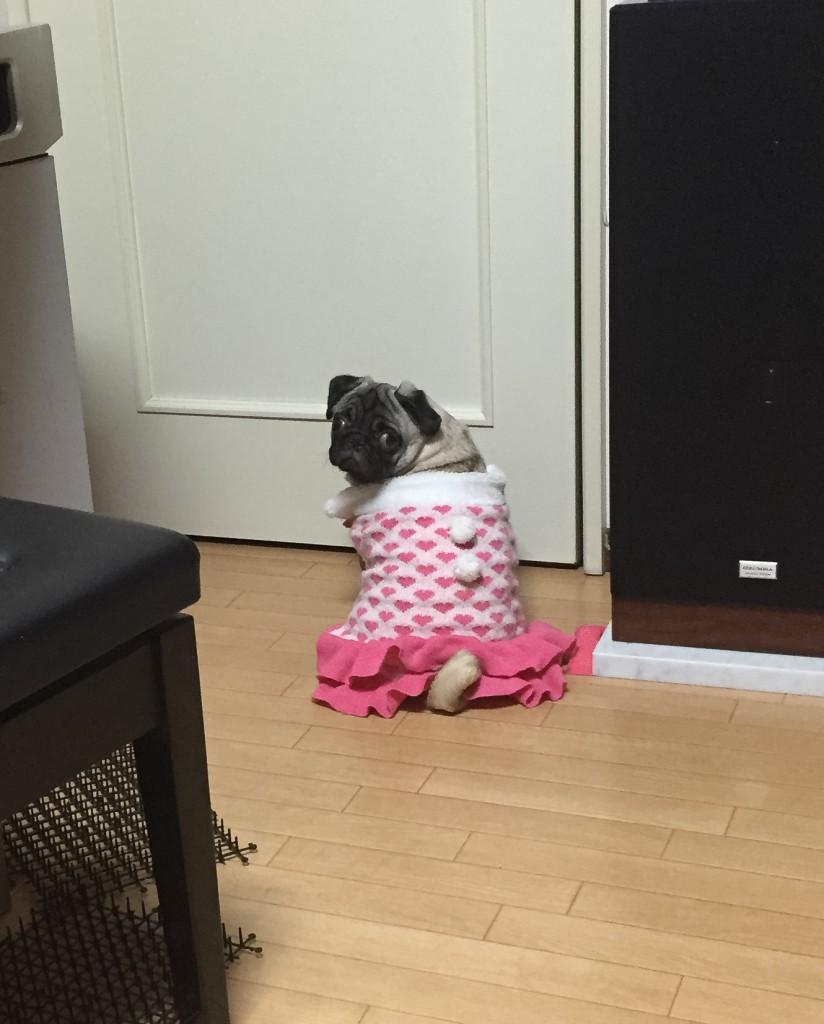 ドア前で待つパグ
