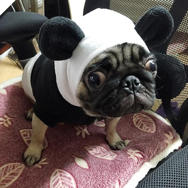 パンダ服その1