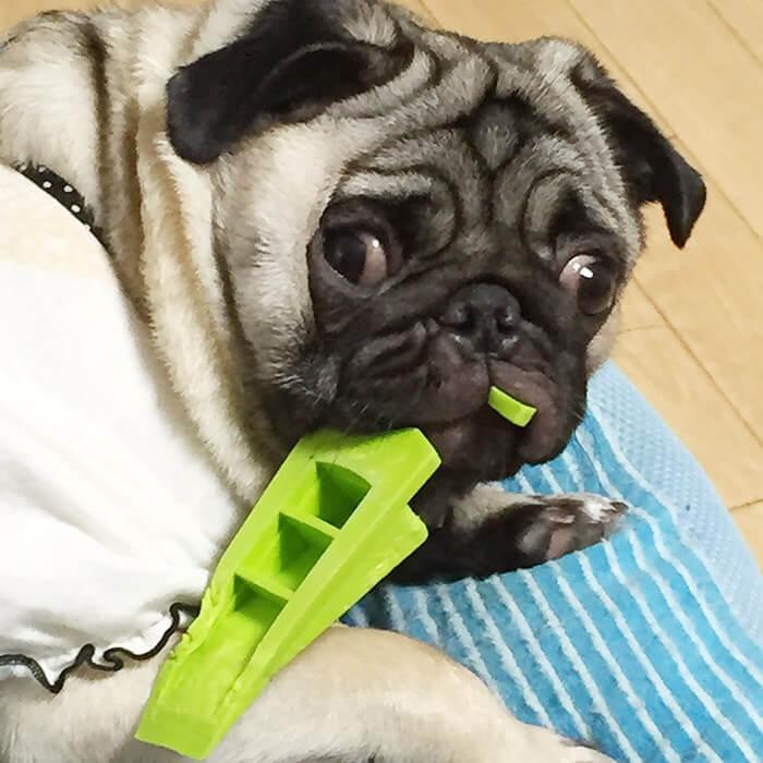パグのおもちゃ2